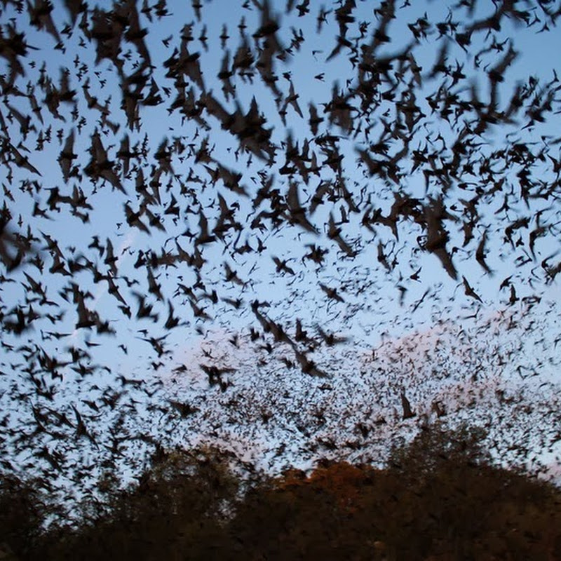 Bracken Bat Cave: World's Largest Bat Colony