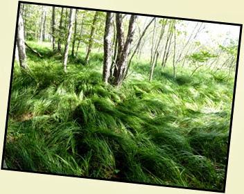 01c - Jesup Path - Beautiful Grasses