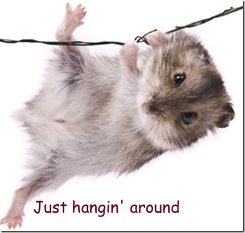 mouse-just-hanging-around (Small)