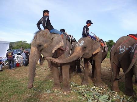 04. Elefanti thailandezi.JPG