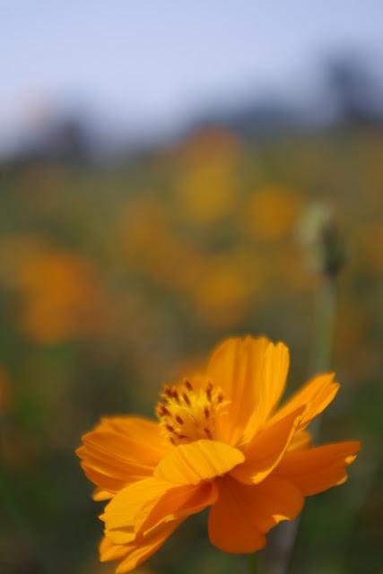 台南~一畝花田