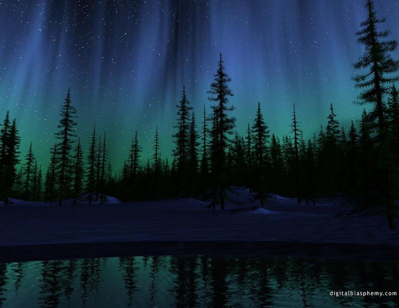 paisajes-de-bosques-de-noche