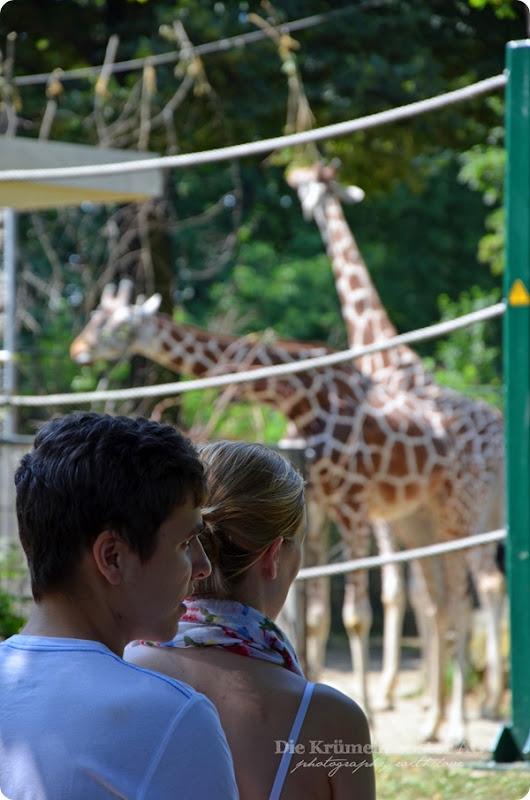Zoo Frankfurt 100713 (77)
