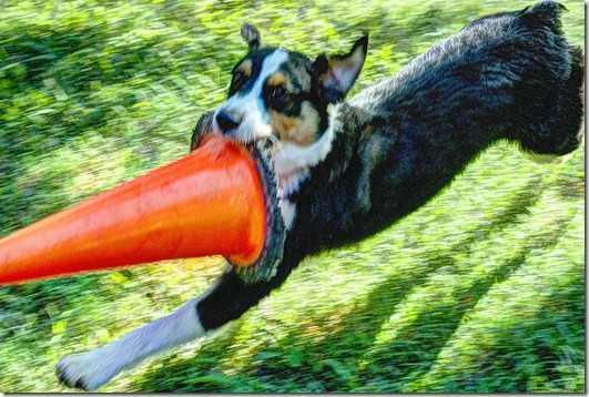 jack orange cone72