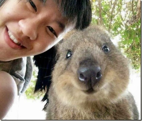 selfies-australian-quokka-006