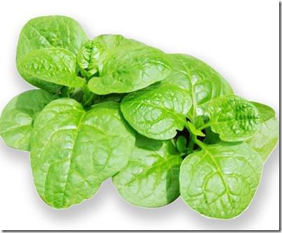 12 落葵 - Lo Kiu - Malabar Spinach
