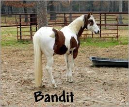 Bandit horse 1 (2)