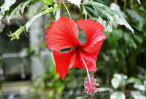 Glória Ishizaka -   Kyoto Botanical Garden 2012 - 3
