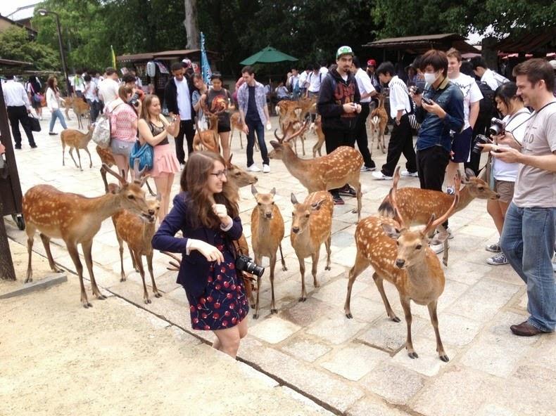 nara-deer-3