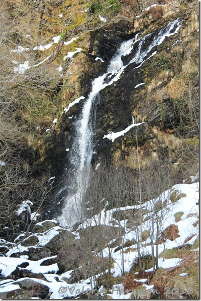6-grey-mares-tail