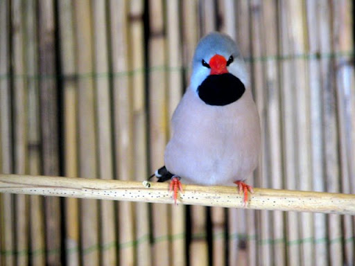 ABC sorrendben: madárnevek - képes játék - Page 4 IMG_3896
