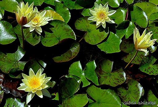 Glória Ishizaka - Flor amarela 24
