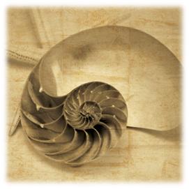 Caracola Nautilus
