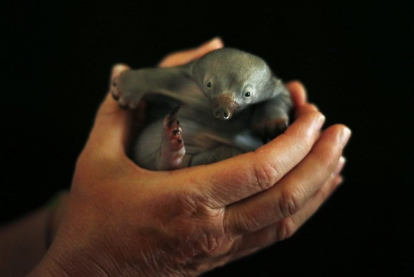 anteater baby 01