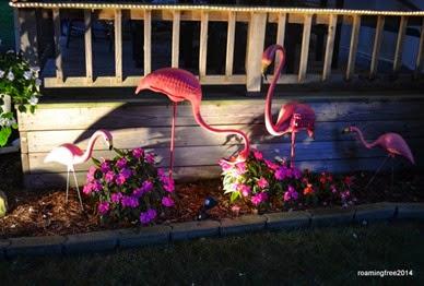 Danny's flamingo garden