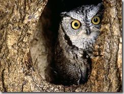 Owl-owls-31450187-1600-1200