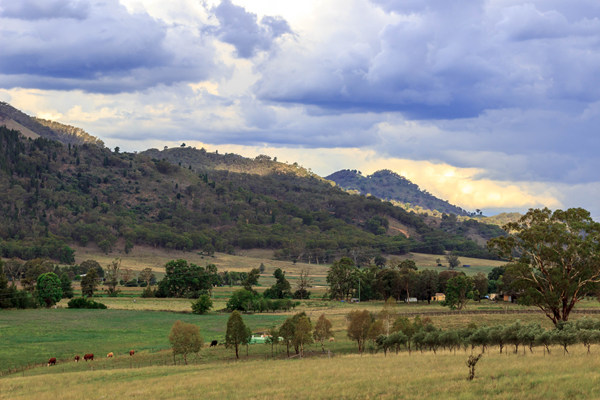 Mudgee, NSW - Wishful Thinking-4