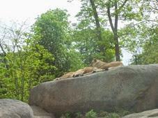 2014.04.21-008 lionnes