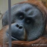 Heidelberger-Zoo_2012-04-09_792.JPG
