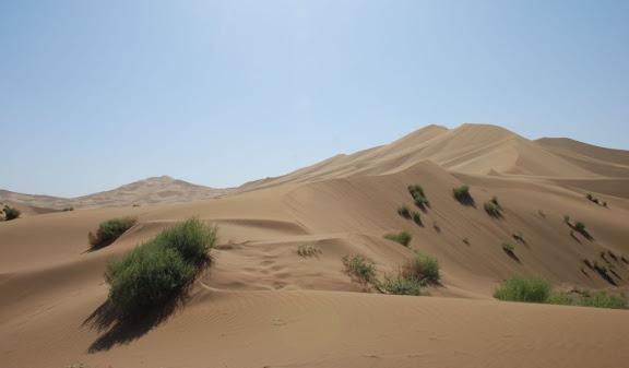 Dunes et verdure
