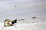 Strike A Pose at Seal Bay - Adelaide, Australia