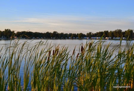 Cattails along the lake