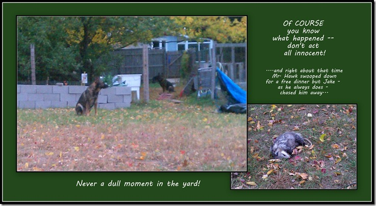 2012.10 - Dead possum in the middle of the yard