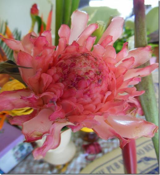 Wax like pink Flower