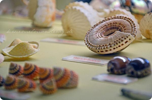 Wremen 20zwölf Tag 5 Muschelmuseum (12)