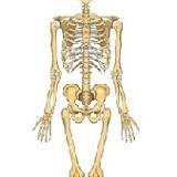 esqueleto 2.jpg