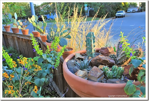 131026_pots-on-front-yard-fence_12b