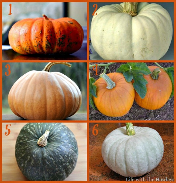 Pumpkin 101 Collage