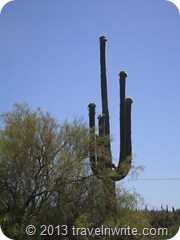 Arizona Spring 2012 131