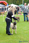 20100513-Bullmastiff-Clubmatch_30907.jpg