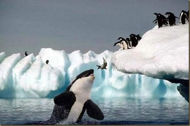 pinguino-ballena
