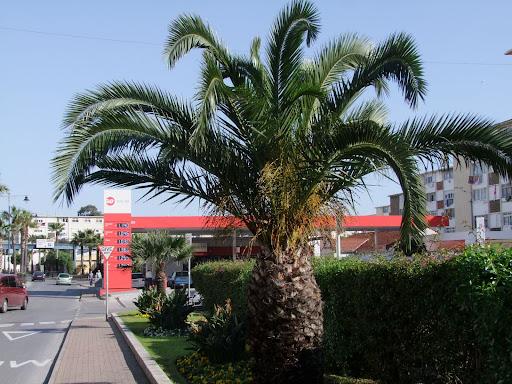 Kjekt med palmer - særlig midtvinters.