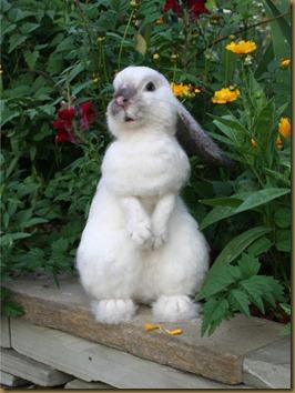 Kanin laget av alpakkafiber