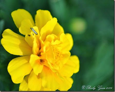 10-17-14 flowers 04