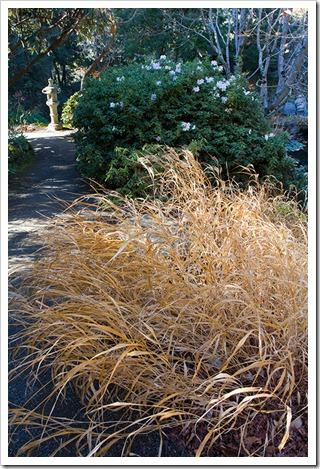 111228_UCBG_azalea forestgrass