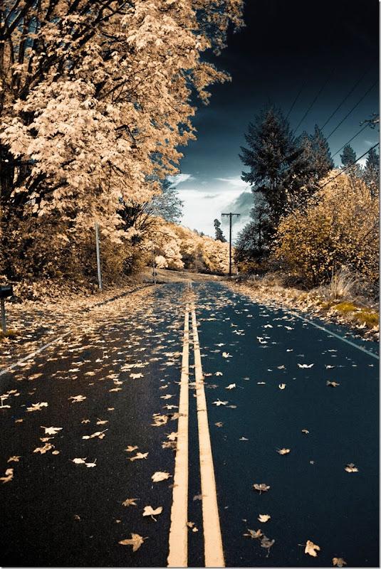 Autumn_isn__t_always_so_nice___by_Sakdasm