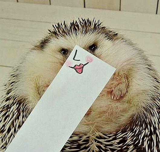hedgehog-marutaro-paper-faces-twitter-6__880