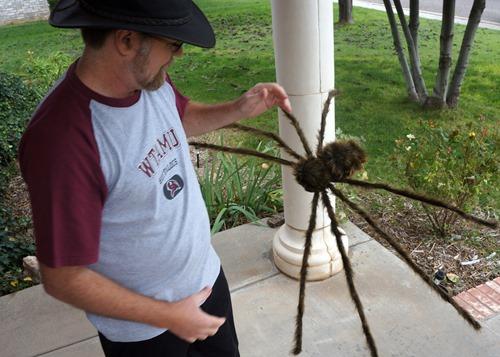 SC spider day