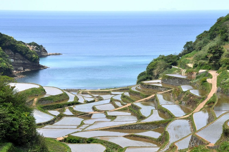 rice-terraces-17