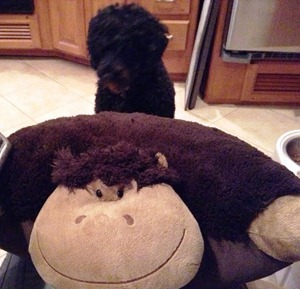 jetta and monkey
