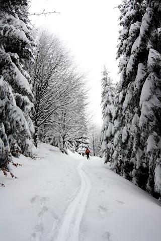... 40cm nového snehu a v ňom nová stopa ...