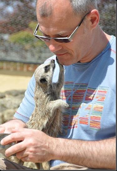 Meerkat gazing into Steve's eyes! DSC_1072