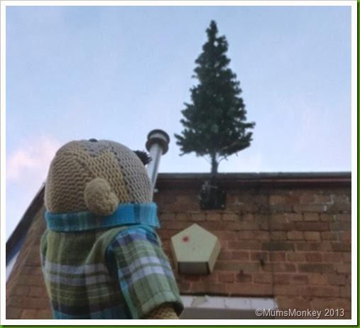 Bilbrook Christmas Tree.b