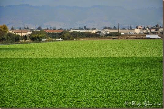 09-30-14 farms 28