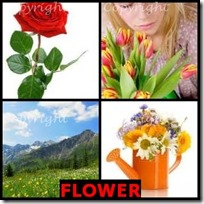 FLOWER- 4 Pics 1 Word Answers 3 Letters