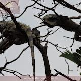 Parque das Iguanas - Guayaquil - Equador